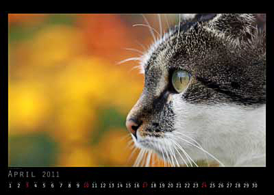 April Foto vom 2cam.net Fotokalender 2011