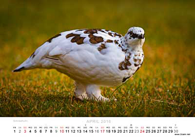 April Foto vom 2cam.net Fotokalender 2016